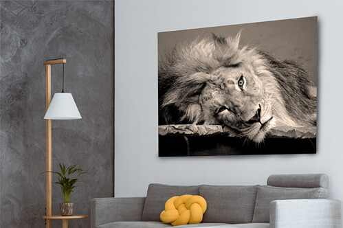 Aluminium prints lion