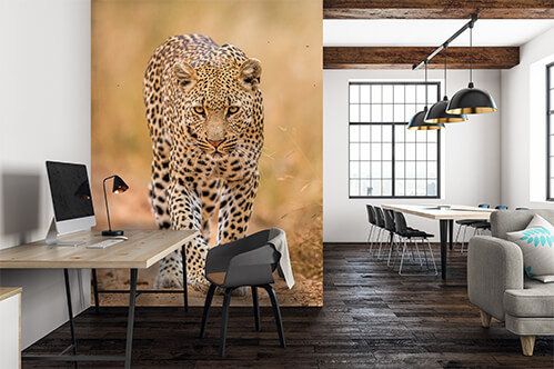 Wall stickers Leopard