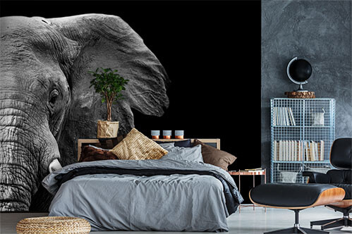 Self-adhesive wall murals Elephant in black and white with a dark background