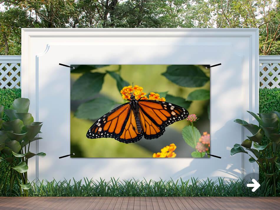 Gardenposter Butterfly