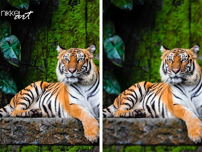 What is Selective Focus?