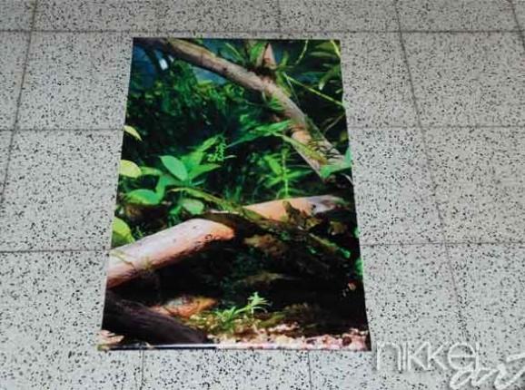 Photo of Garden Poster Aquarium