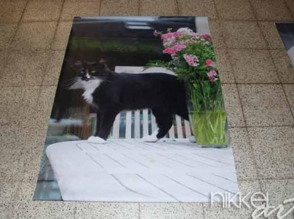 Photo of Garden Poster Cat