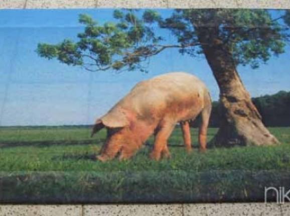 Photo of Garden Poster pig