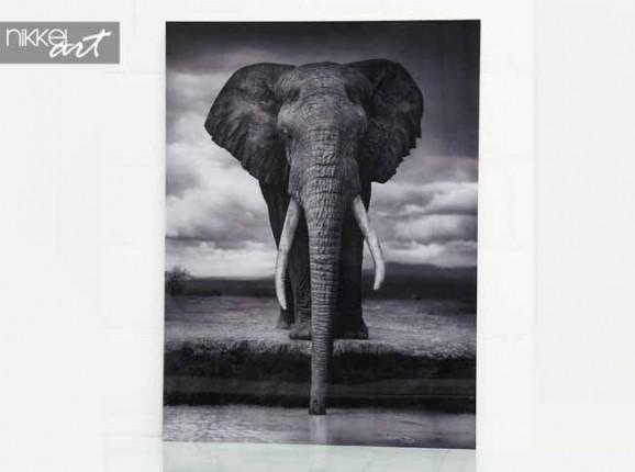 Photo on Aluminium Elephant