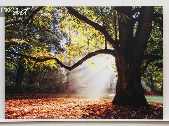 Photo on Canvas Trees