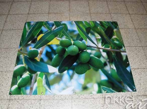Photo on Garden Poster Olive