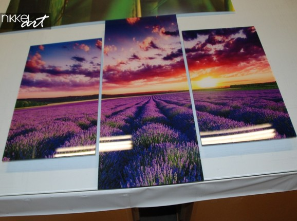 Acrylic Prints Lavender
