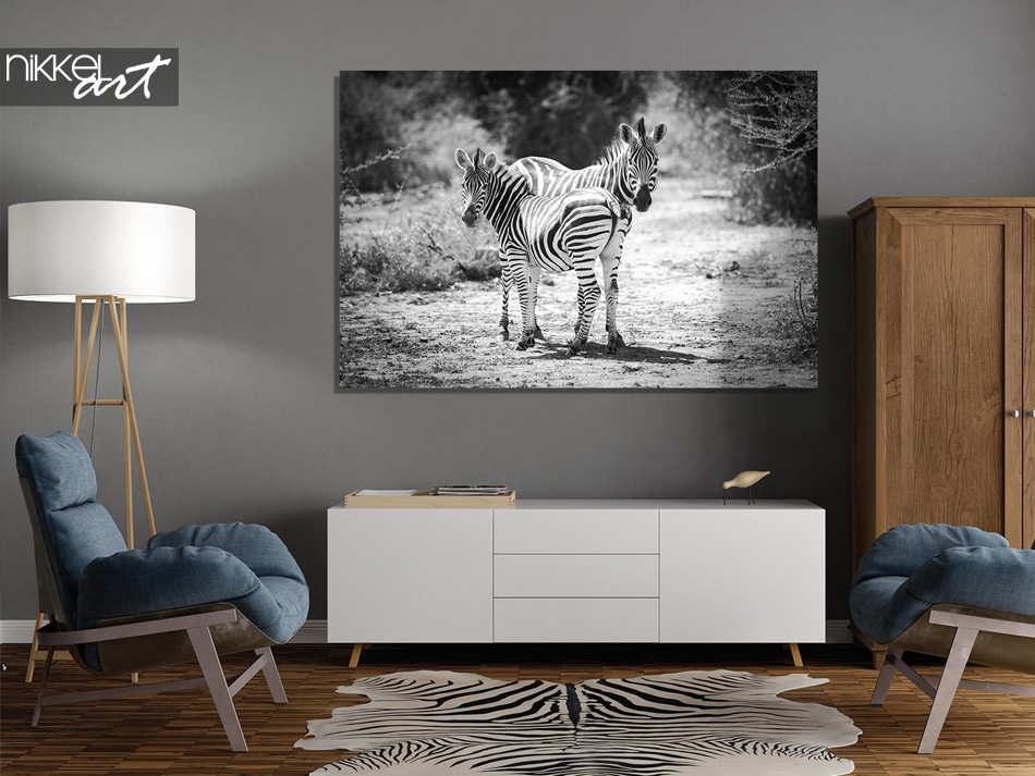 Acrylic Prints Zebra