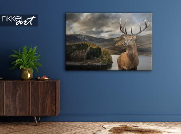 Deer on canvas