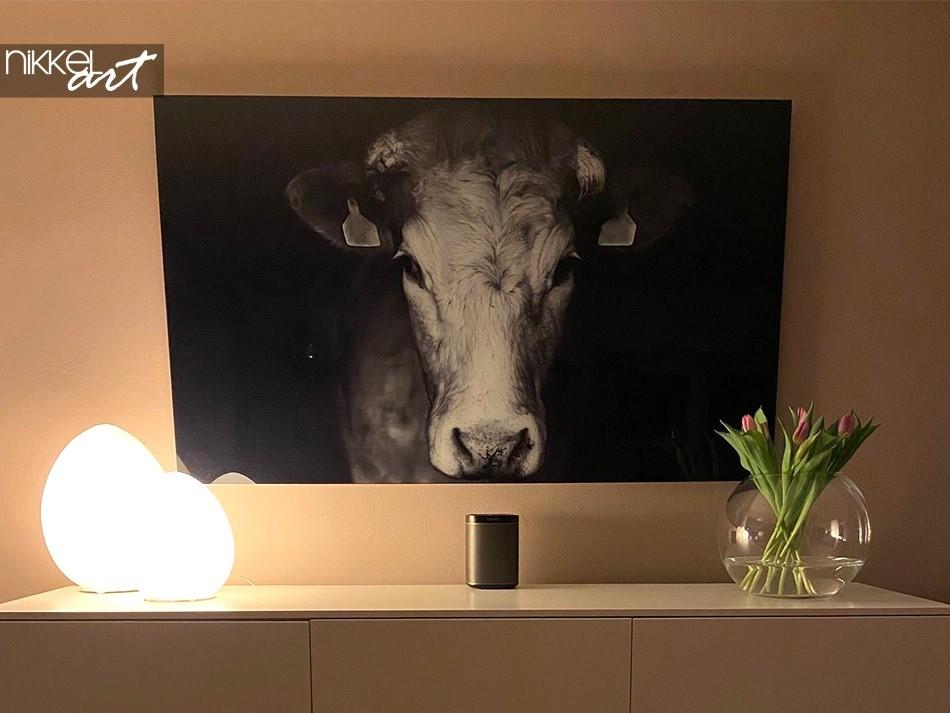 Acrylic Prints Cow