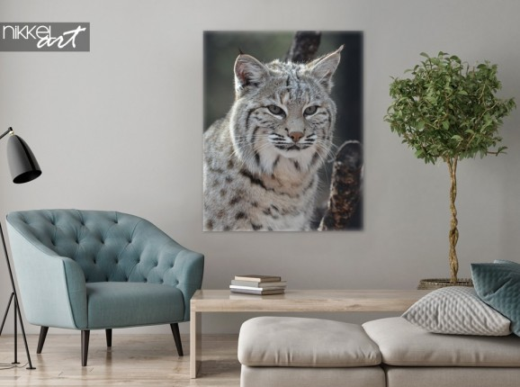 Canvas Prints Canadian Lynx