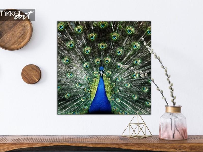 Photo Peacock on Aluminium