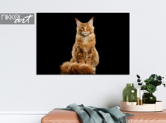 Photo of your cat on aluminium