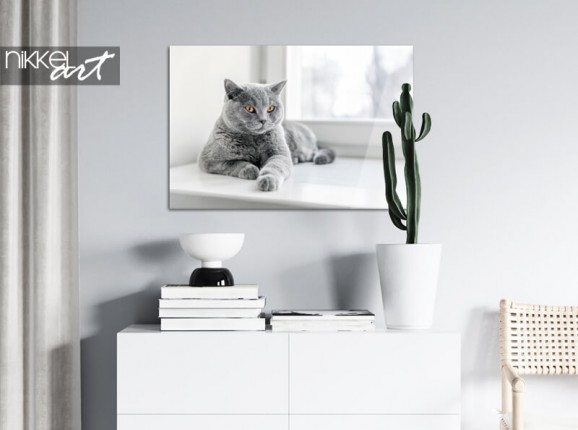 Photo of your cat on acrylic