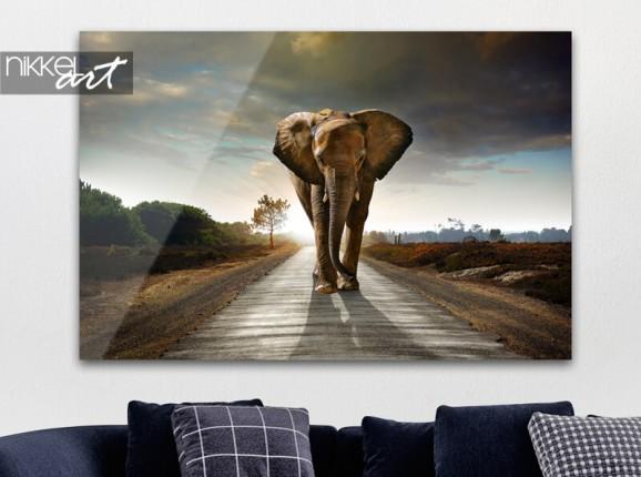 Elephant on acrylic
