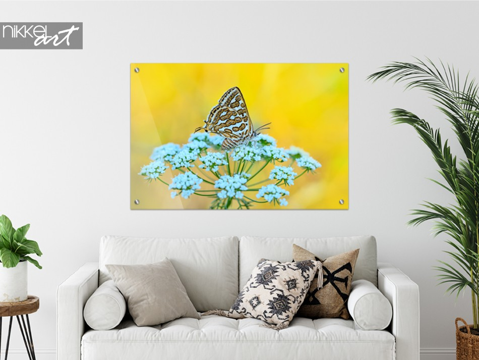 Glass Painting Butterfly