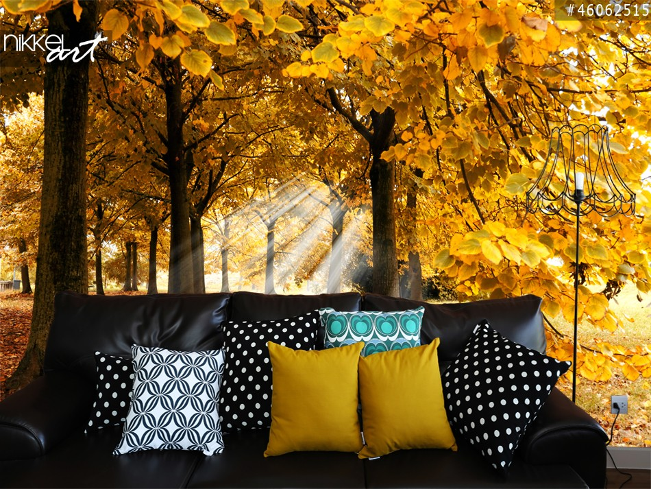 Wall Murals Autumn in forest