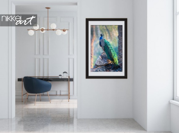 Frames poster of a peacock