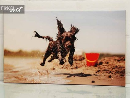 Photo on Canvas Dog