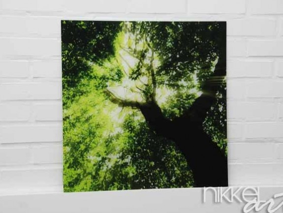 Photo on Acrylic Forest