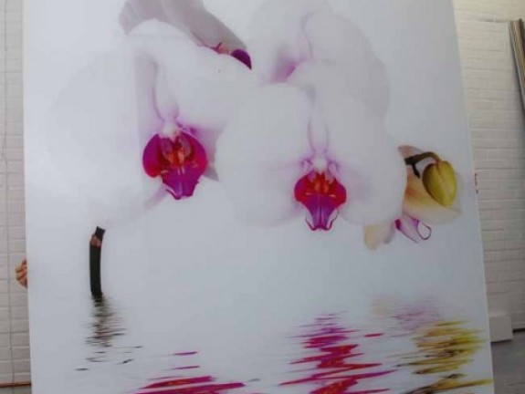Photo on Acrylic Orchid in large format