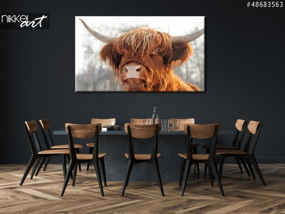 Canvas Prints Scottish cattle